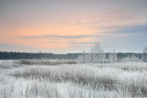 Winter Landscape With Frost At The Sunrise