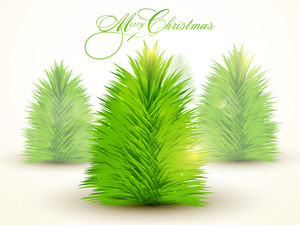 Creative Xmas Trees made by fir branches on shiny background for Merry Christmas celebration.