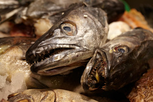Sea food. fish heads.