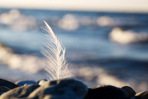 Seagull feather stuck in a rock at the seaside