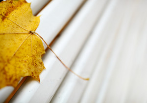 Yellow maple leaf on the bench