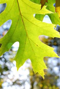 Detail Of Green Leaf