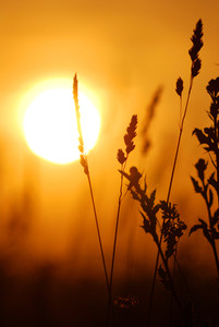 Grass Close-up Against Setting Sun