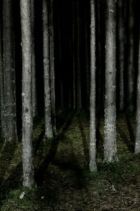 Forest Scene By Night
