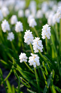White Flowers Close-up In Spring