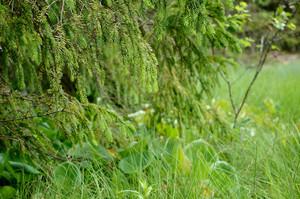 Forest Bog Scene Close-up