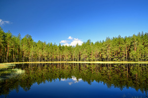 Lake In The Forest With Reflection