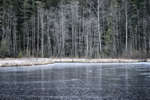 Iced Forest Lake