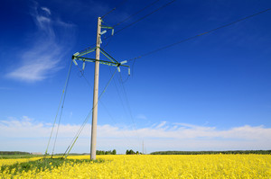Yellow Field And Electricity Line In Latvia