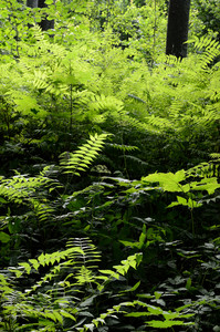 Green Plant In The Forest