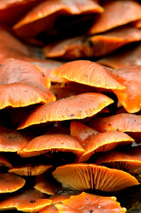 Mushrooms Close-up In A Forest