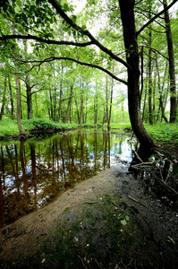 Forest River Scene