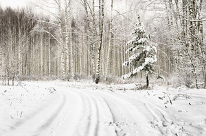 Winter Scene: Road And Forest With Frost On Trees