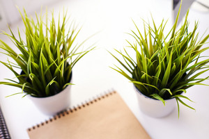 Image Of Two Green Plants In Isolation