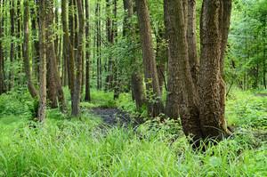 Forest Swamp Scene