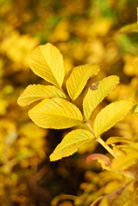 Yellow Leaves In Nature