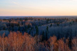 Forest Covered Landscape At The Sunset