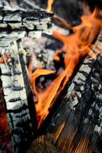 Fire Burning Close-up