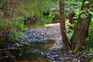 Wald-Fluss-Szene
