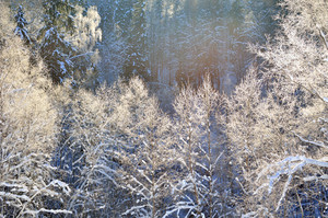 Frost On Trees In River Valley In Winter