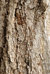 Wooden Cork. Tree Bark Texture.