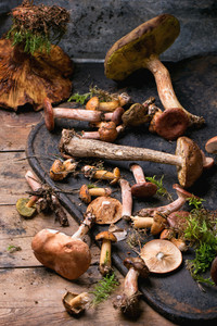 Mix Of Forest Mushrooms