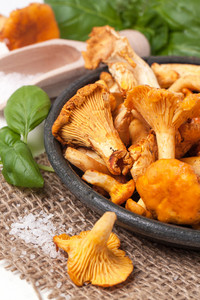 Plate Of Mushrooms Chanterelle