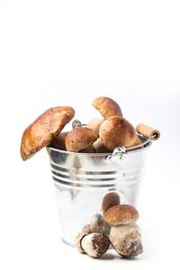 Bucket Of Cep Mushrooms