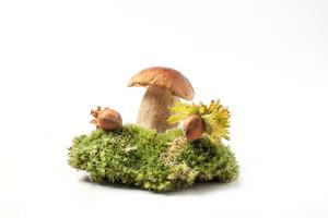 Cep Mushroom With Hazelnuts