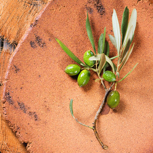 Green Olive Branch