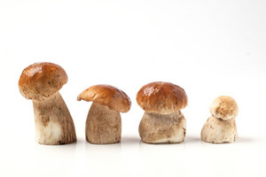 Line Of Cep Mushrooms