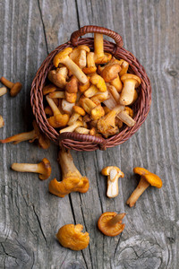 Fresh Chanterelle Mushrooms