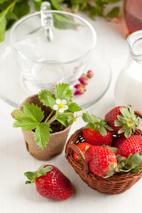 Basket Of Fresh Strawberries And Milk