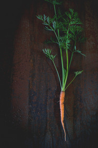 Young Carrot