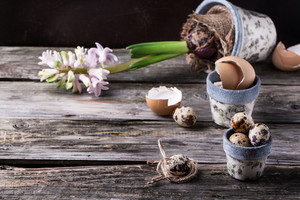 Pots With Quail Eggs And Hyacinthus Flower