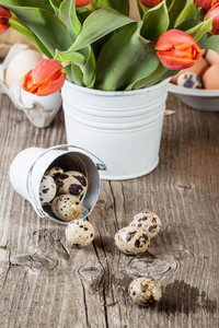 Quail Eggs And Bouquet Of Red Tulips