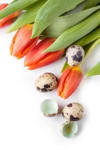 Red Tulips And Quail Eggs On White Background