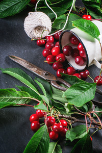 Bunch Cherry Tree With Berries And Leaves