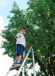 Child taking off the plum in vintage