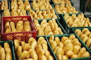 In bread bakery