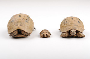 Turtles family on a white backround