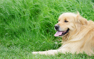 Cute dog lying on grass