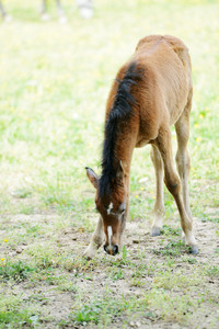 Baby horse in grass