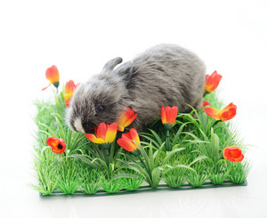 Baby rabbit in grass isolated with copy space