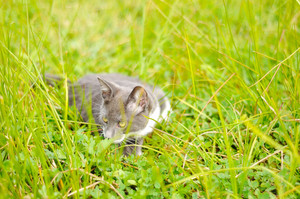 Little cute kitty playing on green meadow