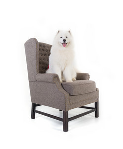 Sofa isolated with white dog
