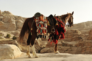 Arabian horse in Petra with traditional clothes
