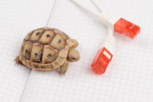 Turtle and slow connection