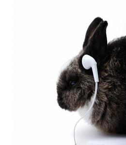 Little rabbit on white