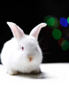 White beautiful rabbit